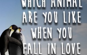 Which Animal Are You Like When You Fall In Love?